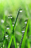 Fresh grass with dew drops — Foto de Stock