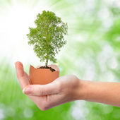 Hand holding tree growing out of the egg — Stock Photo