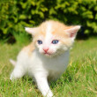Young cat — Foto de Stock