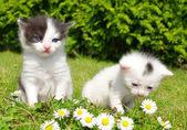 Małe koty — Zdjęcie stockowe