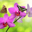 Purple orchid with butterflies — Stock Photo #44719327