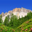 Dolomite peaks, Rosengarten — Stock Photo #44842853