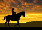 Rider on a horse — Stock Photo