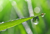 Dew drops — Foto Stock