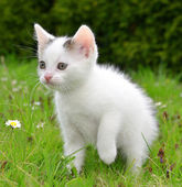 Small kitten — Stock Photo