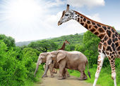 Giraffe and elephants — Stock Photo