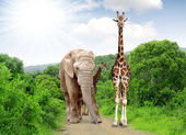 Giraffe and elephant — Stock Photo