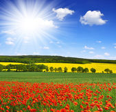 Spring landscape with poppy field — Stock Photo