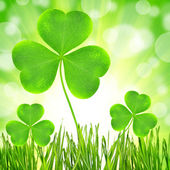 Clover leaf — Stock Photo