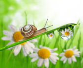 Snail on dewy grass — Stock Photo