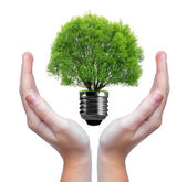 Green tree growing out of a bulb — Stock Photo