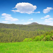 Bavarian Forest National Park - Germany — Stock Photo