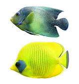 Tropical reef fish — 图库照片