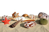 Shells with starfish — Foto de Stock