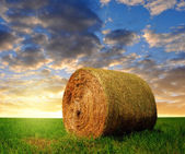 Straw bale in a lush green field — Stock Photo