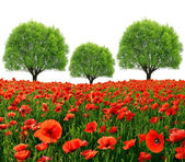 Red poppy field with trees — Stock Photo