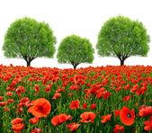 Red poppy field with trees — Foto de Stock