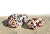 Shells on the sand — Stock Photo