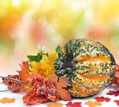 Kleurrijke pompoen — Stockfoto