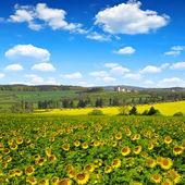 Våren landskap — Stockfoto