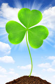 Green clover leaf — Stockfoto