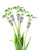 Plants growing from bulbs — Stock Photo