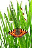 Dew with butterfly — Stock Photo