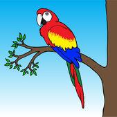 Ilustracja papuga ara — Wektor stockowy