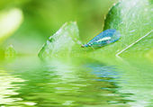 Green lacewing on the plant near the water with reflections — Stock Photo