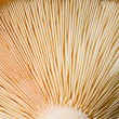 Mushroom bottom texture — Stock Photo