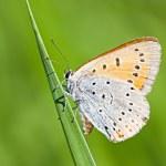 Orange butterfly on green stem — Stock Photo #49710795