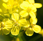 Yellow flowers by spring — Stock Photo