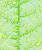 Dew drops on green stem — Stock Photo
