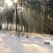 Stock Photo: Sunrays in forest