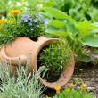 Stock Photo: Garden decoration