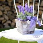 Lavender decoration — Stock Photo #45121177