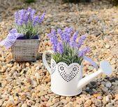 Lavender decoration — Foto de Stock
