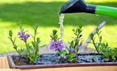 Water the flowers — Stock Photo