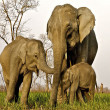 African elephants with baby — Stock Photo