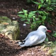 White bird with red beak — Stock Photo #38690321