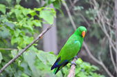 Green Macaw — Stock Photo