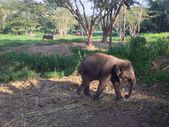 Little elephant kept on the rope. — Stock Photo