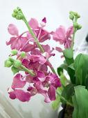 Orquídea de flores de color rosa — Foto de Stock