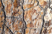 Texture of bark of an old tree — Stock Photo