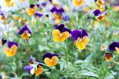 Dekorative Blumen in das Blumenbeet im park — Stockfoto