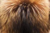 赤キツネの毛皮のテクスチャ — ストック写真
