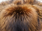 Textura de piel de zorro rojo — Foto de Stock
