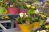 Flowers on the counter street flower shop in winter — Stock Photo