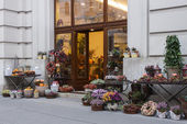 Vienna , Austria , 28 October 2011 . Showcase flower shop — Stok fotoğraf
