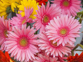 Bouquet of bright pink gerberas — Stockfoto